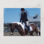 Paint Pony Horse Show Postcard