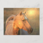 Palomino Horse in Light Postcard