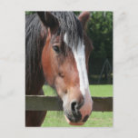 Picture of a Quarter Horse Postcard