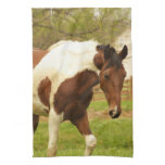 Roaming Paint Horse Kitchen Towel