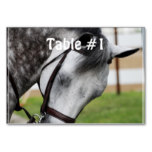 Sweet Appaloosa Horse Card
