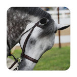 Sweet Appaloosa Horse Coaster