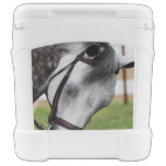 Sweet Appaloosa Horse Cooler