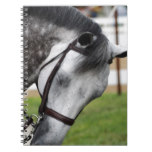 Sweet Appaloosa Horse Notebook