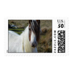 Sweet Connemera Pony Postage