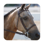 Sweet Roan Pony Coaster