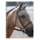 Sweet Roan Pony Notebook