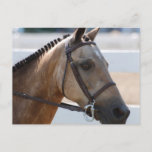 Sweet Roan Pony Postcard