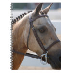Sweet Roan Pony Spiral Notebook