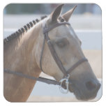 Sweet Roan Pony Square Paper Coaster
