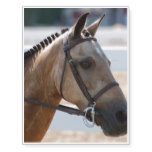 Sweet Roan Pony Temporary Tattoos
