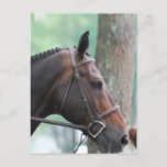 Tacked Dark Bay Horse Postcard