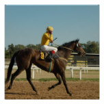 Thoroughbred Race Horse Poster Print