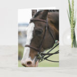 Warmblood Horse Photo  Greeting Card